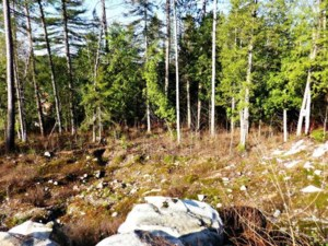 25145811 - Vacant lot for sale