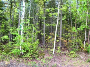13561852 - Vacant lot for sale
