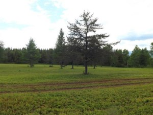 13736923 - Vacant lot for sale