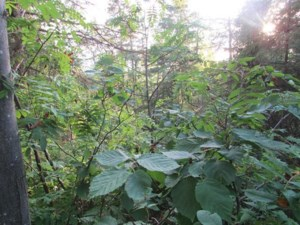 24123487 - Vacant lot for sale
