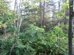 25993461 - Vacant lot for sale