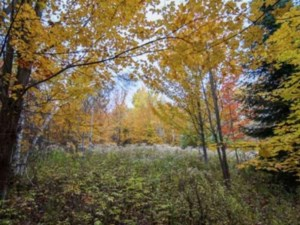 22339181 - Vacant lot for sale