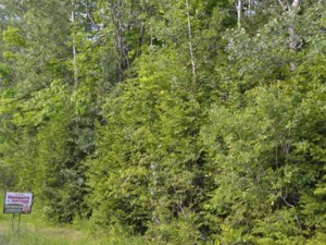 18951005 - Vacant lot for sale