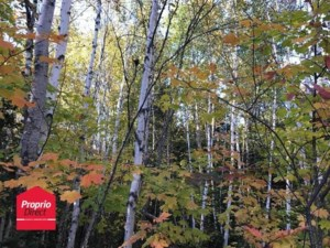 13174712 - Vacant lot for sale
