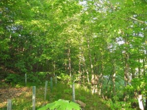 8703999 - Vacant lot for sale