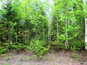 28650553 - Vacant lot for sale