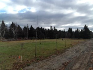 17771701 - Vacant lot for sale