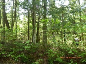 15758314 - Vacant lot for sale
