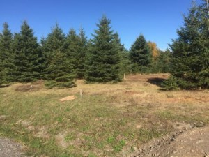 25541602 - Vacant lot for sale