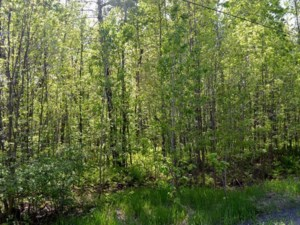 17636000 - Vacant lot for sale