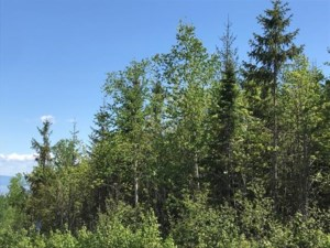 12676391 - Vacant lot for sale