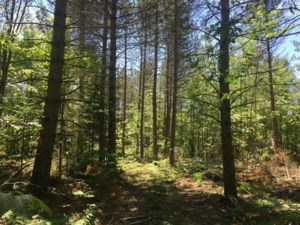 12994118 - Vacant lot for sale