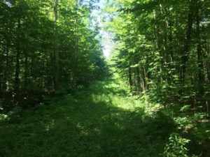 15700179 - Vacant lot for sale