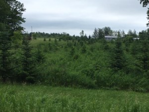 20357077 - Vacant lot for sale