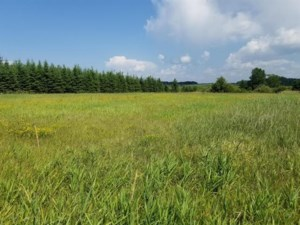 25745507 - Vacant lot for sale