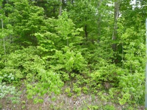 10715185 - Vacant lot for sale