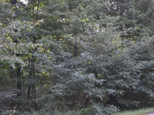 28736565 - Vacant lot for sale