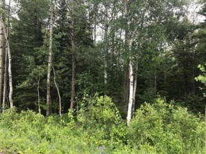 26609002 - Vacant lot for sale