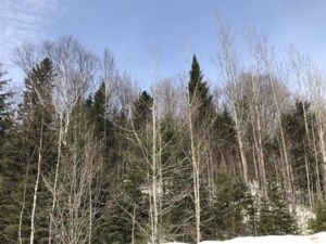 16292485 - Vacant lot for sale