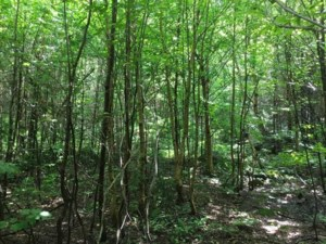 23532219 - Vacant lot for sale
