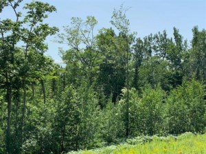 12831837 - Vacant lot for sale
