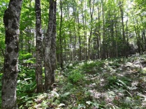 25638433 - Vacant lot for sale
