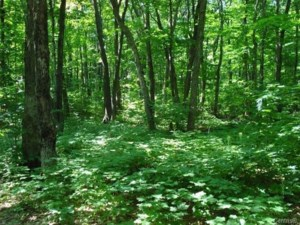 28543998 - Vacant lot for sale