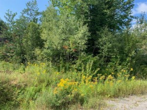 14629554 - Vacant lot for sale