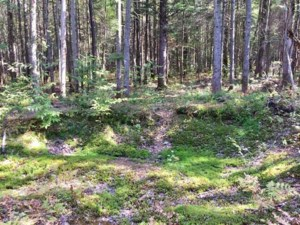 26171396 - Vacant lot for sale