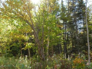 24561684 - Vacant lot for sale