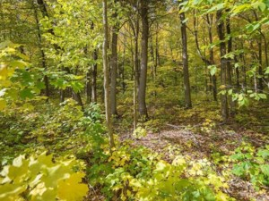 22027492 - Vacant lot for sale