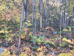 26087786 - Vacant lot for sale