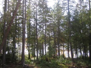 23964100 - Vacant lot for sale