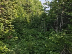 26895373 - Vacant lot for sale