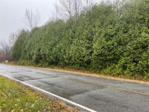 21981629 - Vacant lot for sale