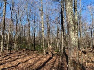 13253533 - Vacant lot for sale