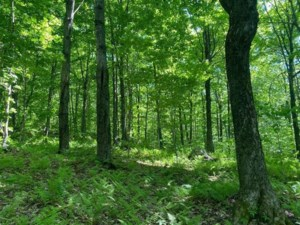 25681400 - Vacant lot for sale