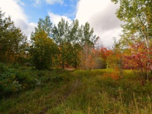 14669562 - Vacant lot for sale