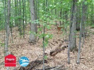 23709171 - Vacant lot for sale