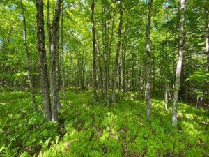 22524904 - Vacant lot for sale