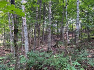 26354272 - Vacant lot for sale