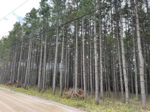 18863829 - Vacant lot for sale