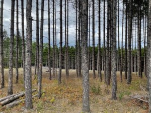 26720276 - Vacant lot for sale