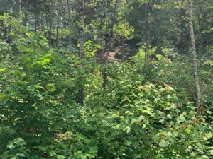20768527 - Vacant lot for sale