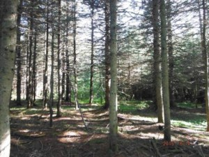 15719520 - Vacant lot for sale