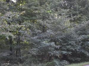 28736565 - Terrain vacant à vendre